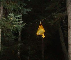 bear bag device