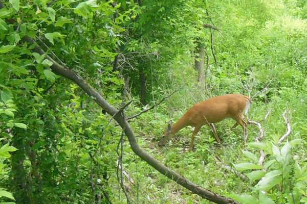 Deer on Hike