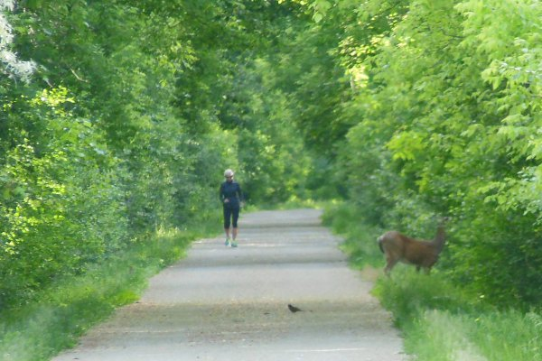 Hiker, Bird, Deer on Trail