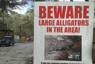 florida trail alligators