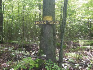 Lincoln Taylor county line