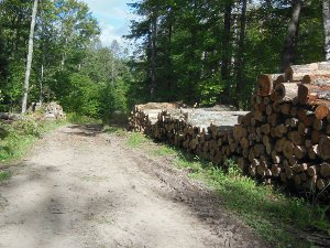 Logging Area