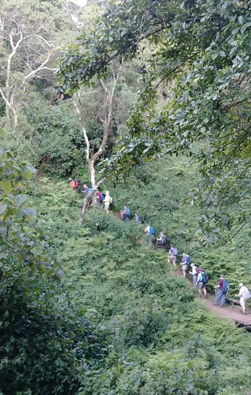 Kilimanjaro Rain Forest