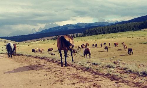 Wind River Horse Herd