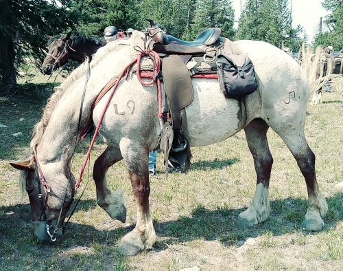 Rosie the horse