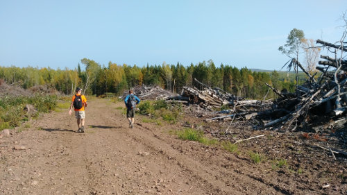 Superior Clearcuts