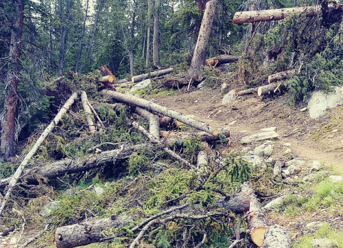 Wind River trail clearing