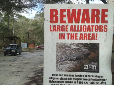 Green Swamp Alligators